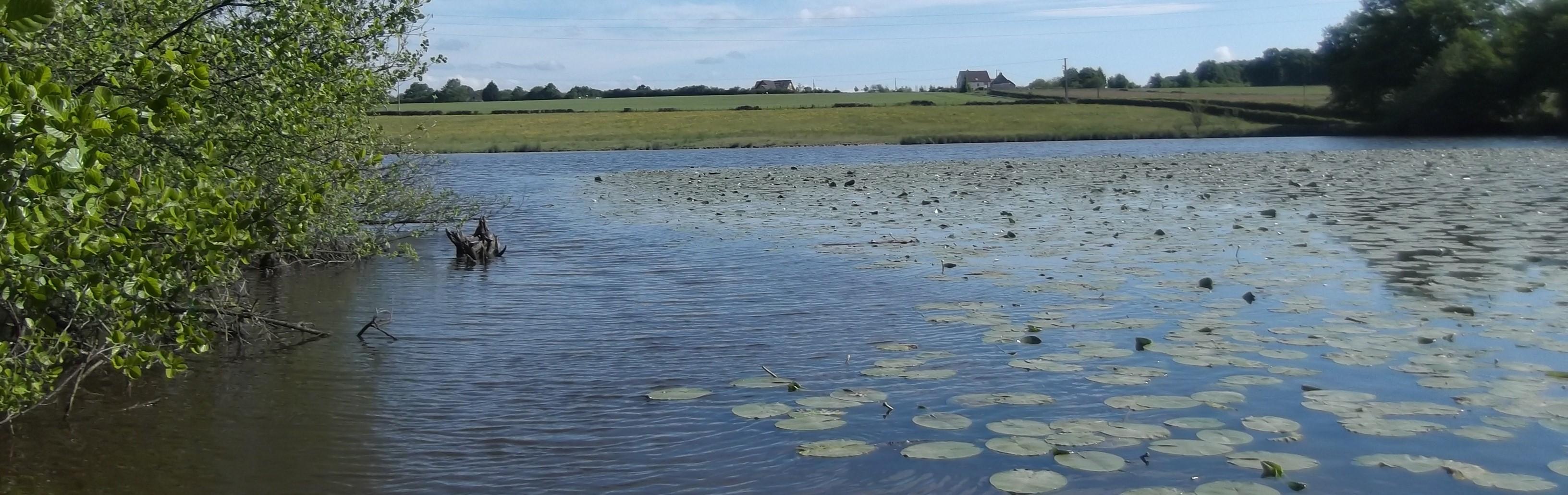 Les étangs de Sologne Bourbonnaise